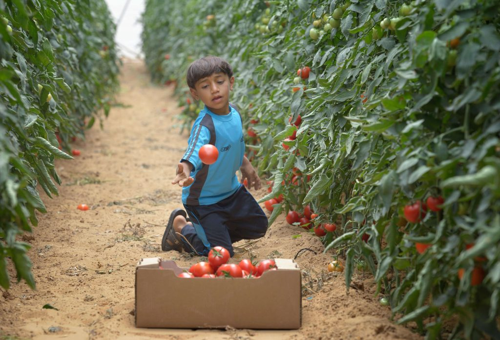 Child with tomatos