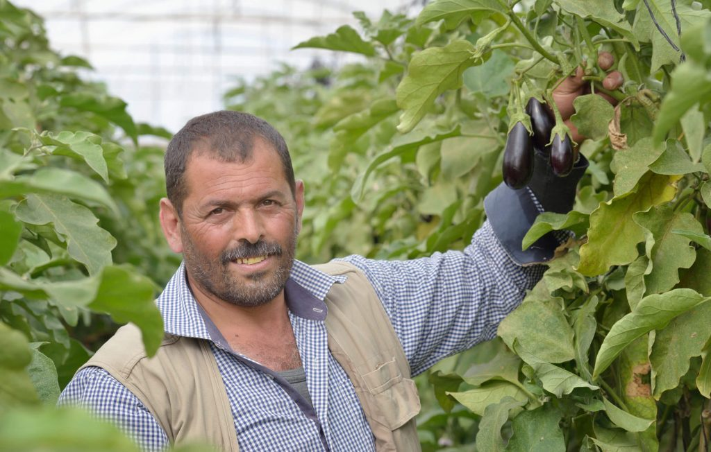 Man in greenhouse