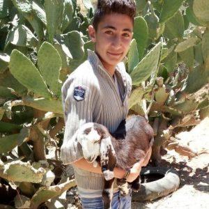 Livestock for a family in Jordan